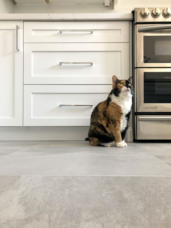 a cat sits in front of a custom kitchen drawer